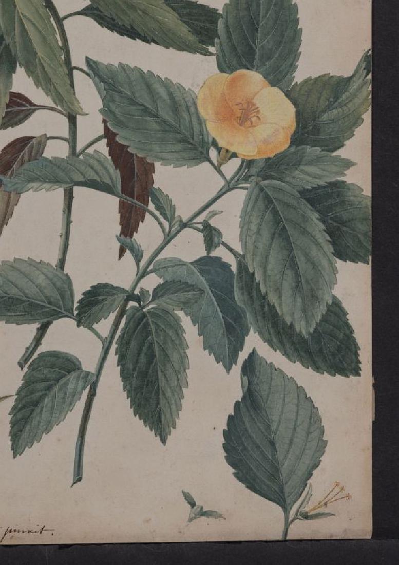 GEORG DYONIS EHRET (1710-1770) BOTANICAL ILLUSTR.. - 5