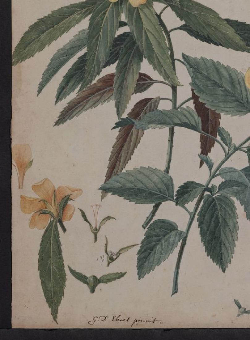 GEORG DYONIS EHRET (1710-1770) BOTANICAL ILLUSTR.. - 6