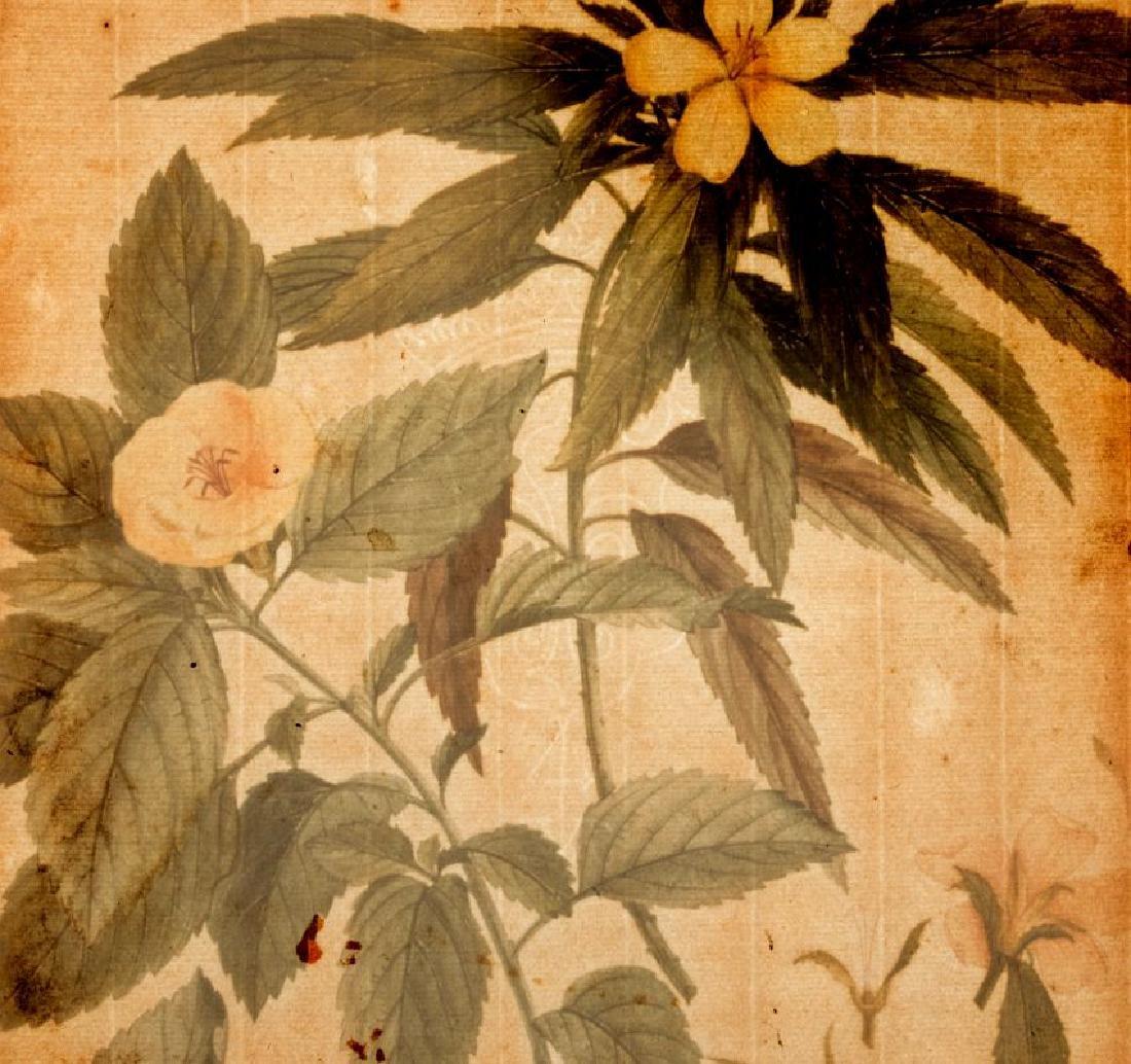 GEORG DYONIS EHRET (1710-1770) BOTANICAL ILLUSTR.. - 9