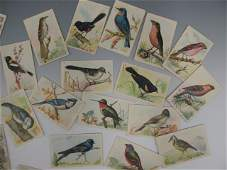ARM AND HAMMER BRAND TRADING CARDS WITH BIRDS