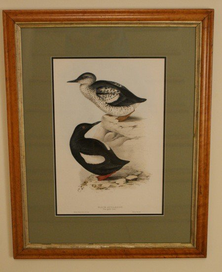 8: HAND COLORED STONE LITHOGRAPH AFTER J & E GOULD