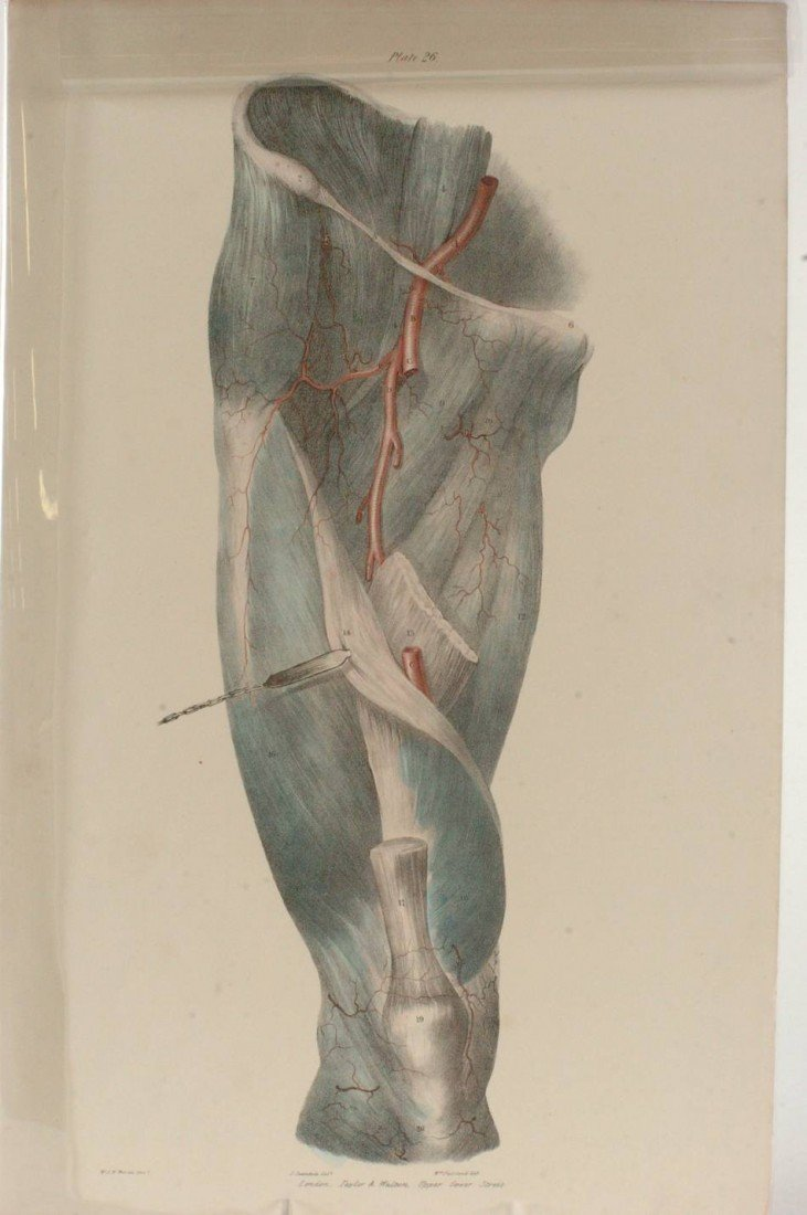 TWO MID-19TH CENTURY ANATOMICAL LITHOGRAPHS