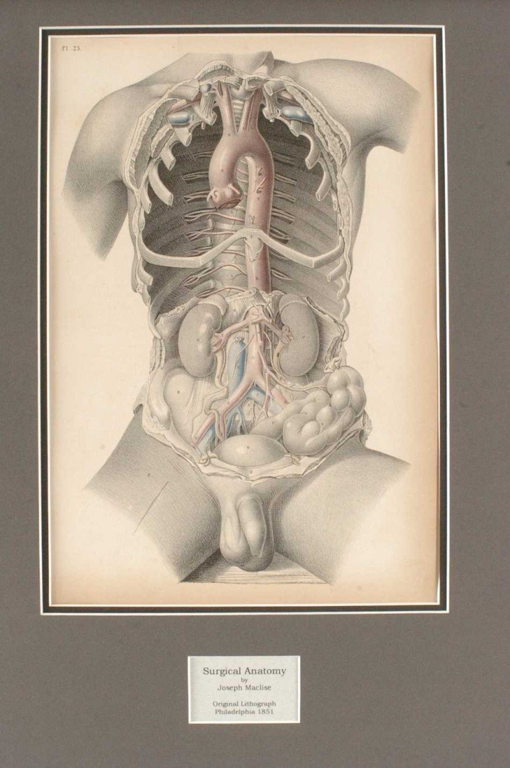 TWO JOSEPH MACLISE 1851 ANATOMICAL LITHOGRAPHS