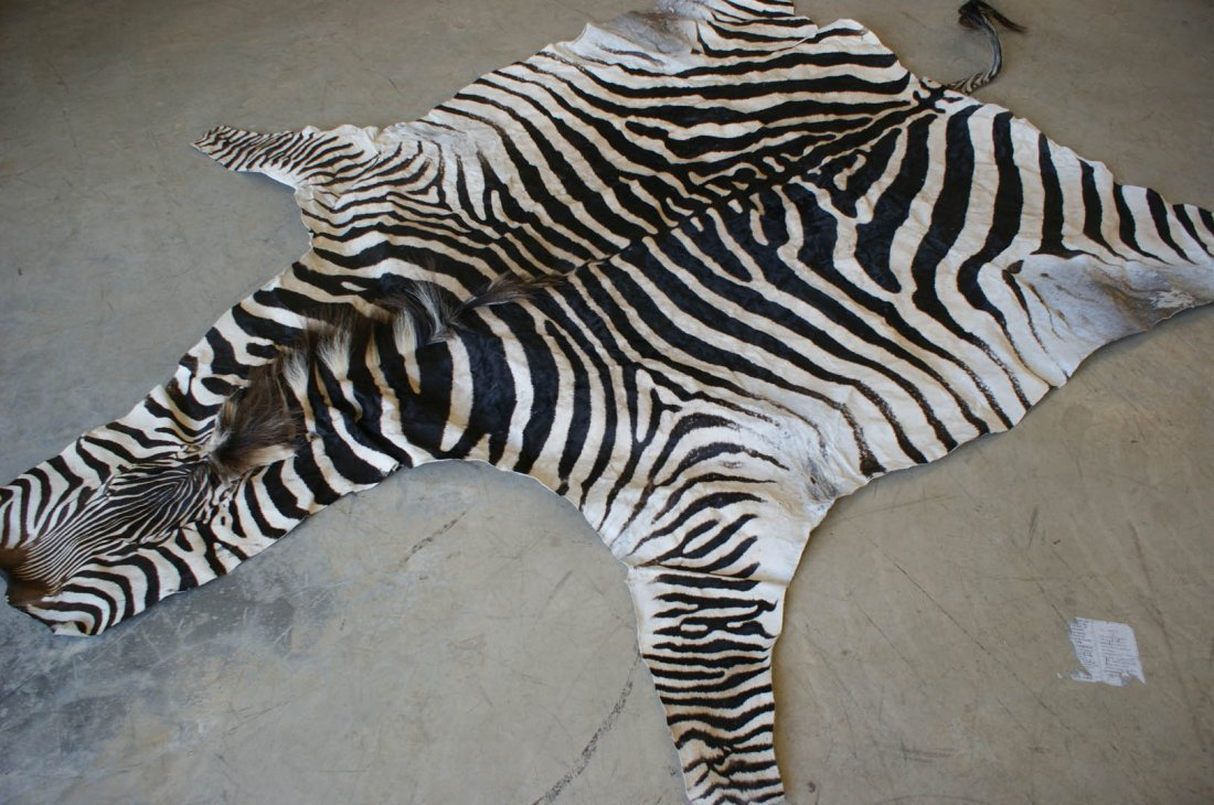 BROWN AND WHITE ZEBRA SKIN