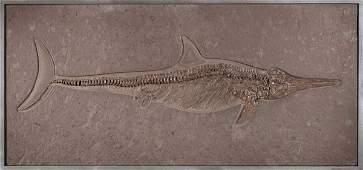 Eccezionale esemplare di ittiosauro,