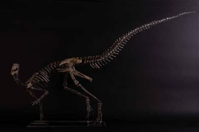 Othnielosaurus,