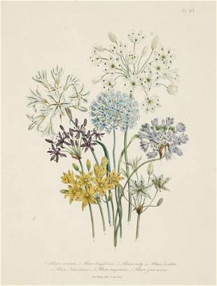 EIGHT HAND COLOR LITHOGRAPHS OF BOTANICAL