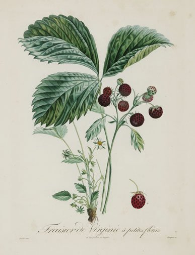 21: EIGHT HAND COLORED STIPPLE ENGRAVINGS OF