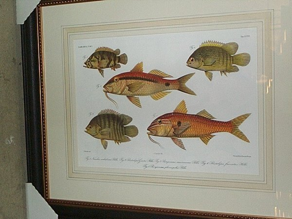 10: EIGHT COLOR LITHOGRAPHS OF FISH.  After P