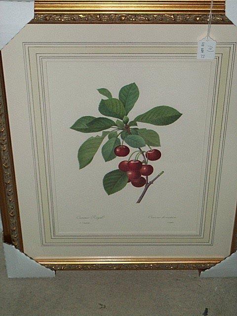 12: NINE COLOR LITHOGRAPHS OF FRUIT.  After P