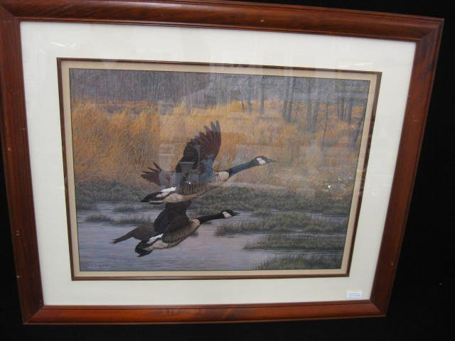 415B: Christopher Forrest, lithograph, Canadian Geese