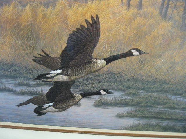 415B: Christopher Forrest, lithograph, Canadian Geese - 2