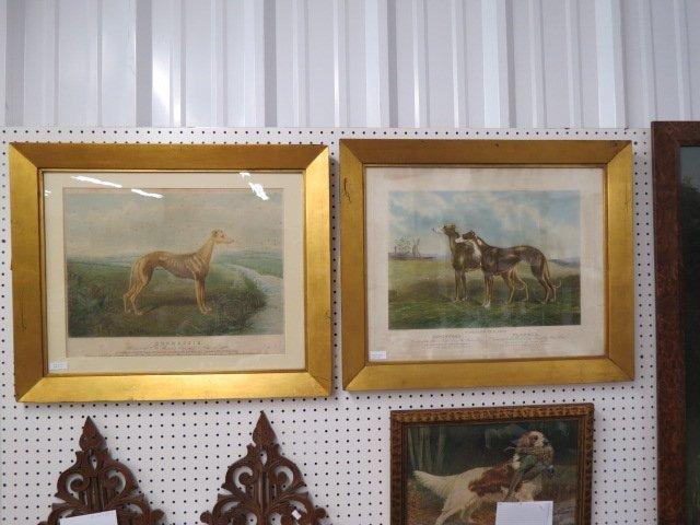 "Pair of Canine Engravings Coomassie"","""