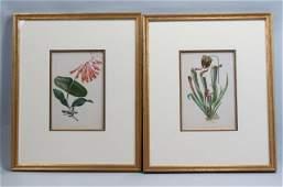 Pair of Louis Prang Botanical Chromolithographs,