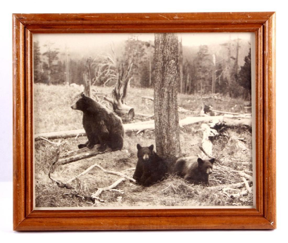 Original Haynes Yellowstone National Park Photo