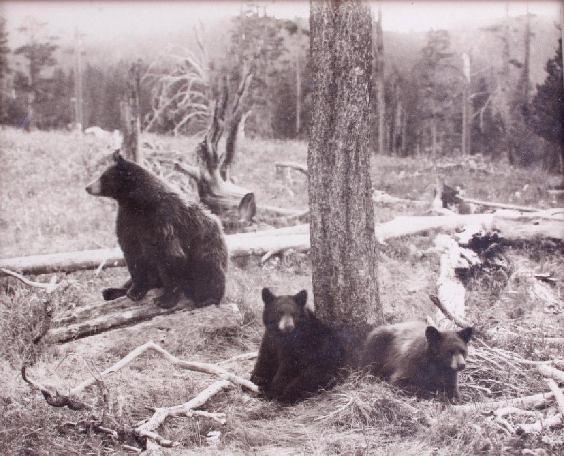 Original Haynes Yellowstone National Park Photo - 2