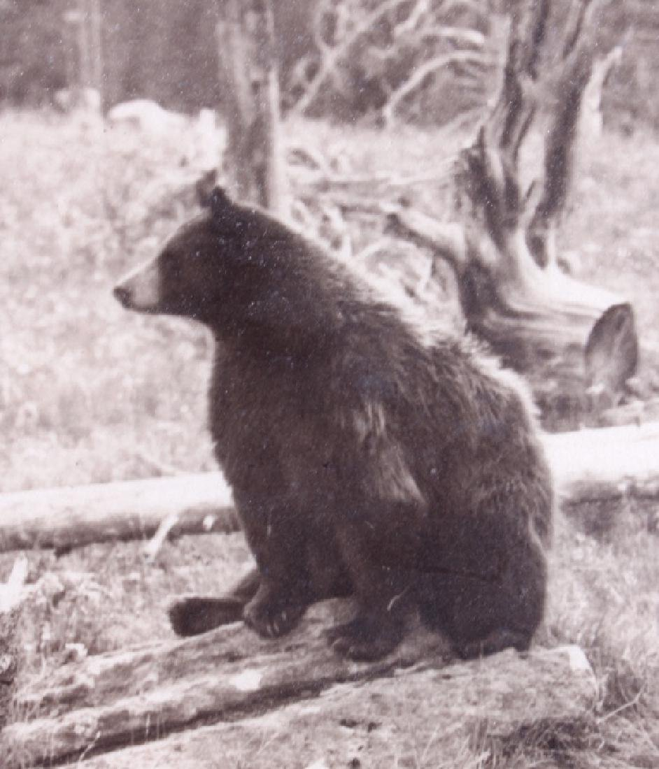 Original Haynes Yellowstone National Park Photo - 3