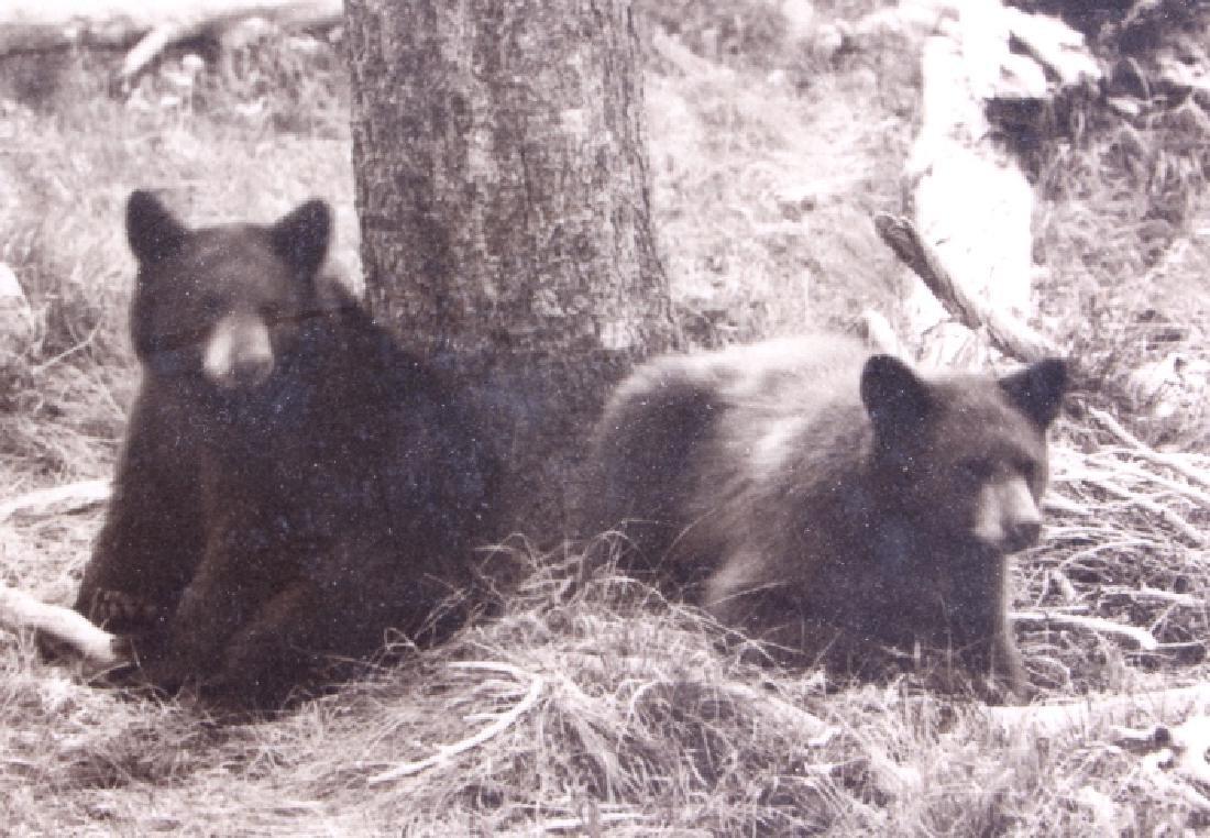 Original Haynes Yellowstone National Park Photo - 4