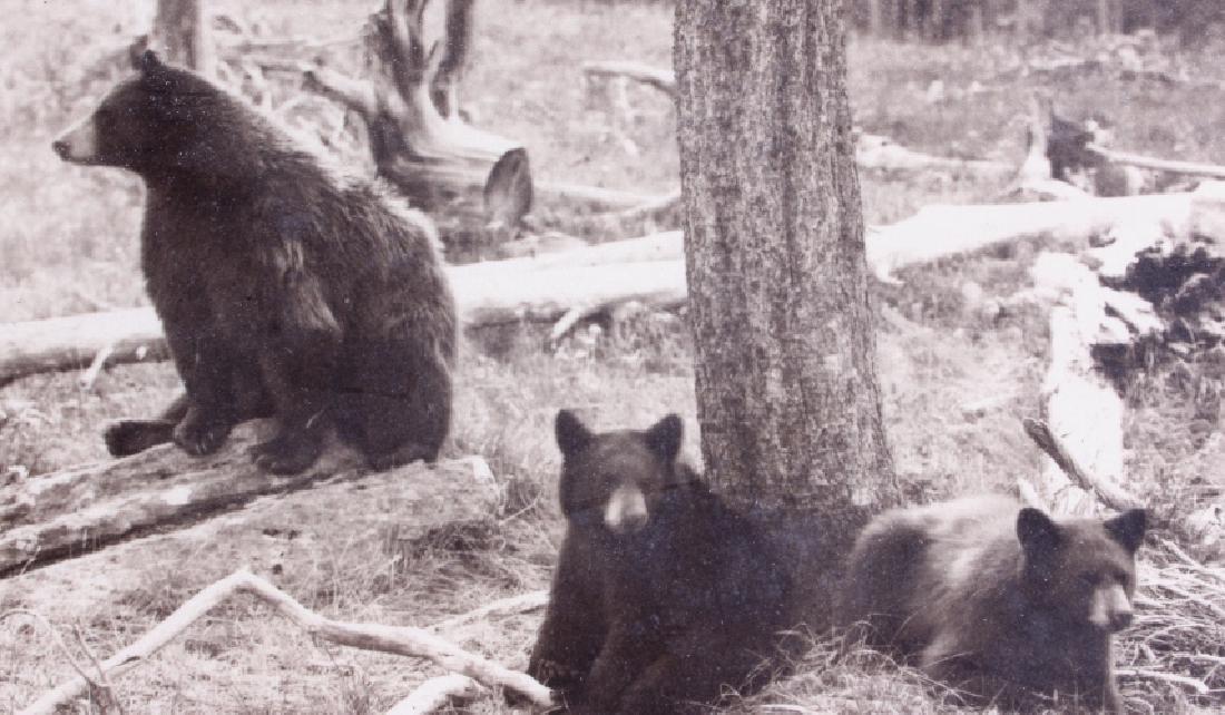Original Haynes Yellowstone National Park Photo - 5