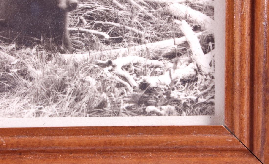 Original Haynes Yellowstone National Park Photo - 6
