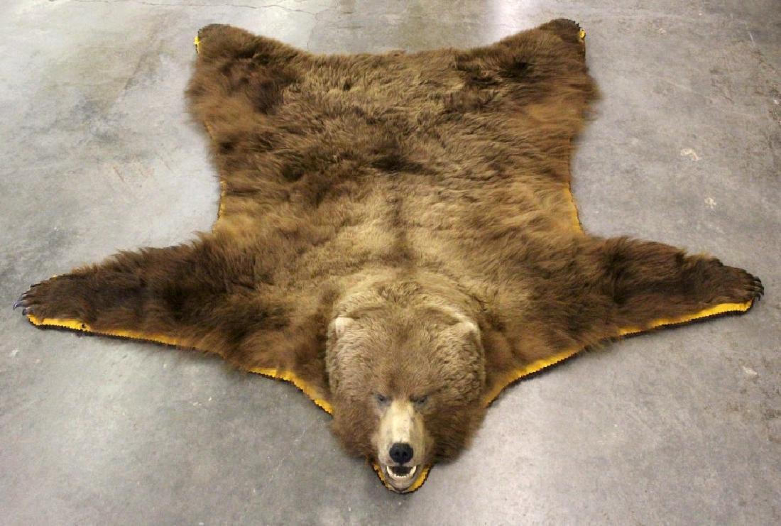Alaska Kodiak Brown Bear Rug Trophy Rug