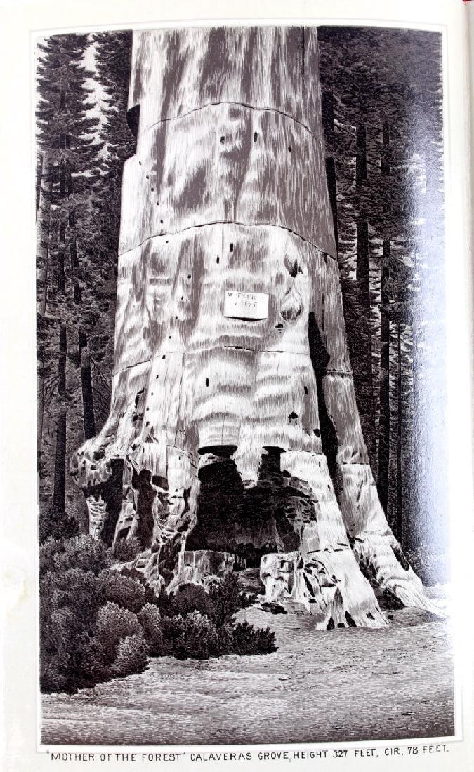 c.1890 Yellowstone Park Views Souvenir Album - 10