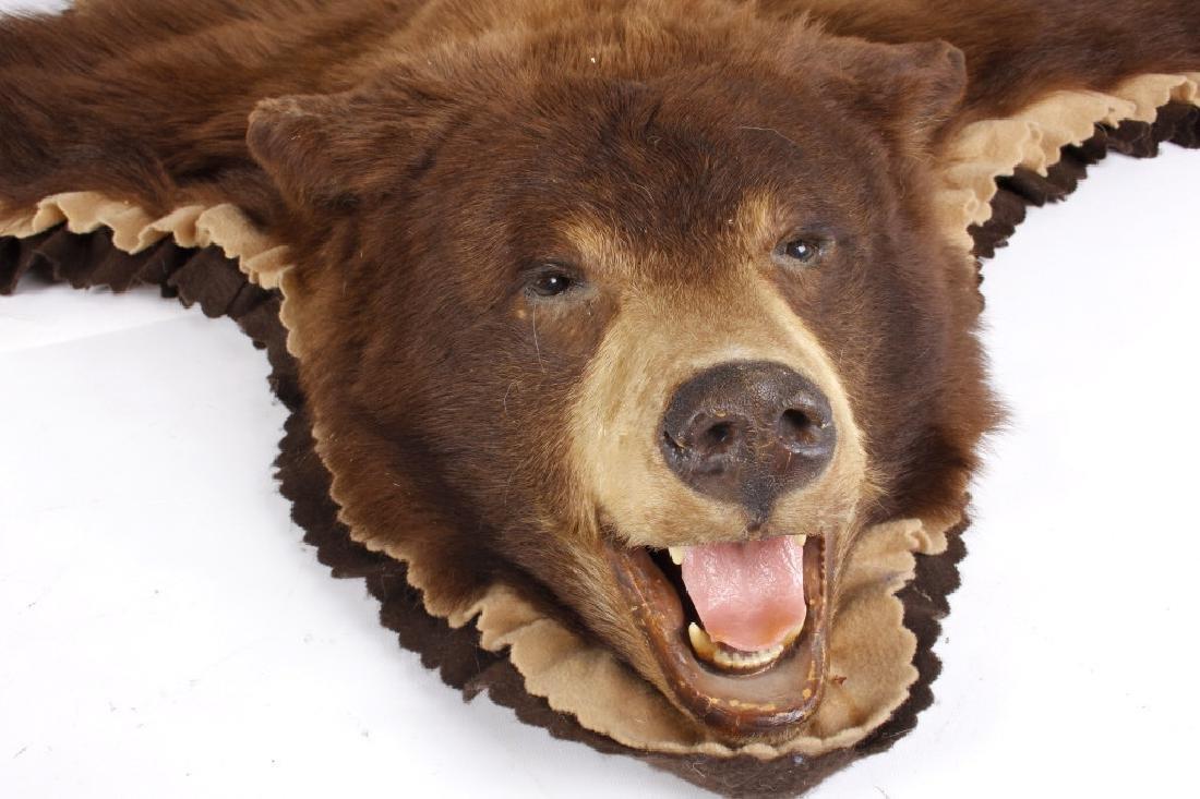 Montana Black Bear Taxidermy Rug Mount - 2