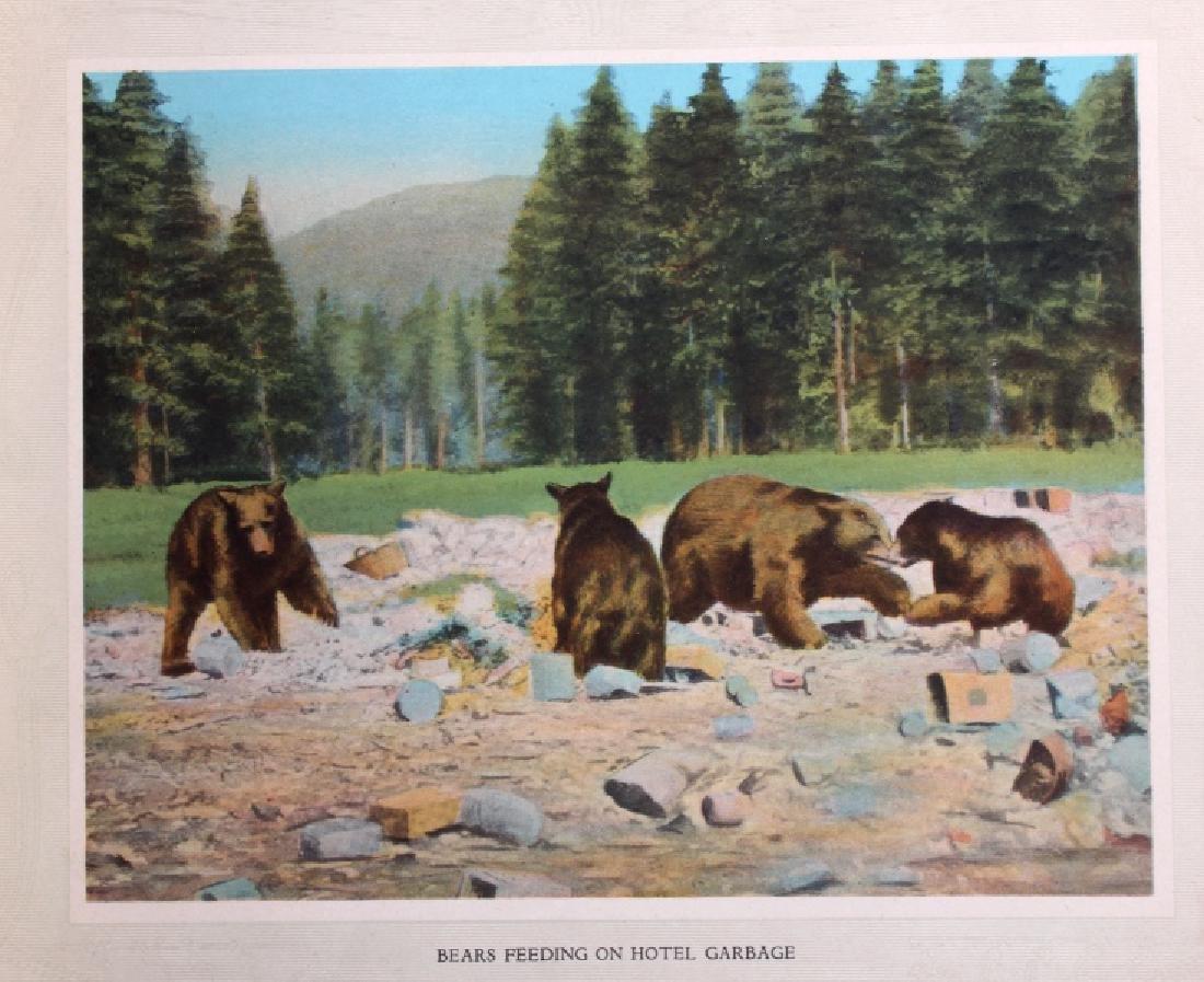 C.1910 Souvenir Album of Yellowstone Park - 3