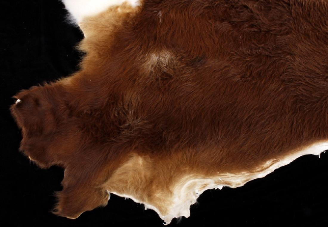 Tanned Hereford Cow Hide Rug - 2