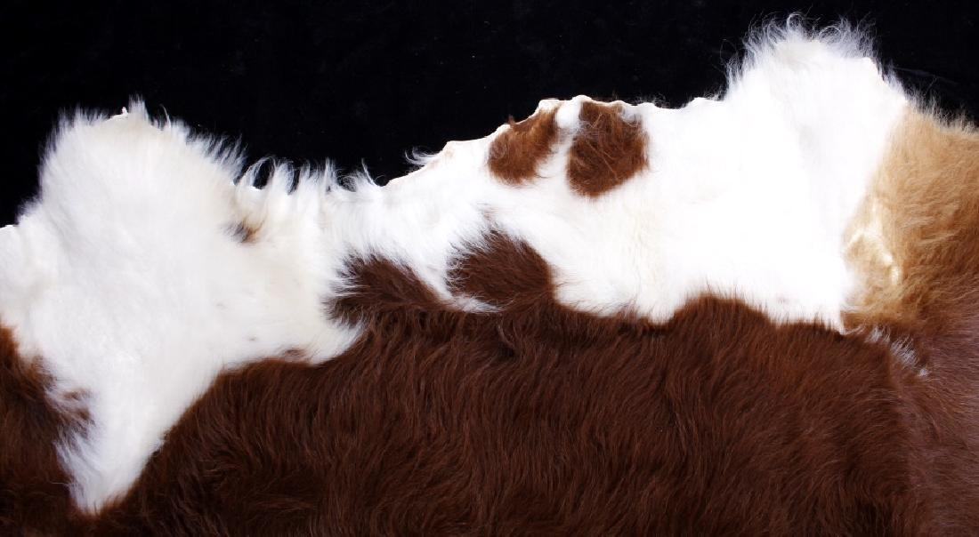 Tanned Hereford Cow Hide Rug - 8