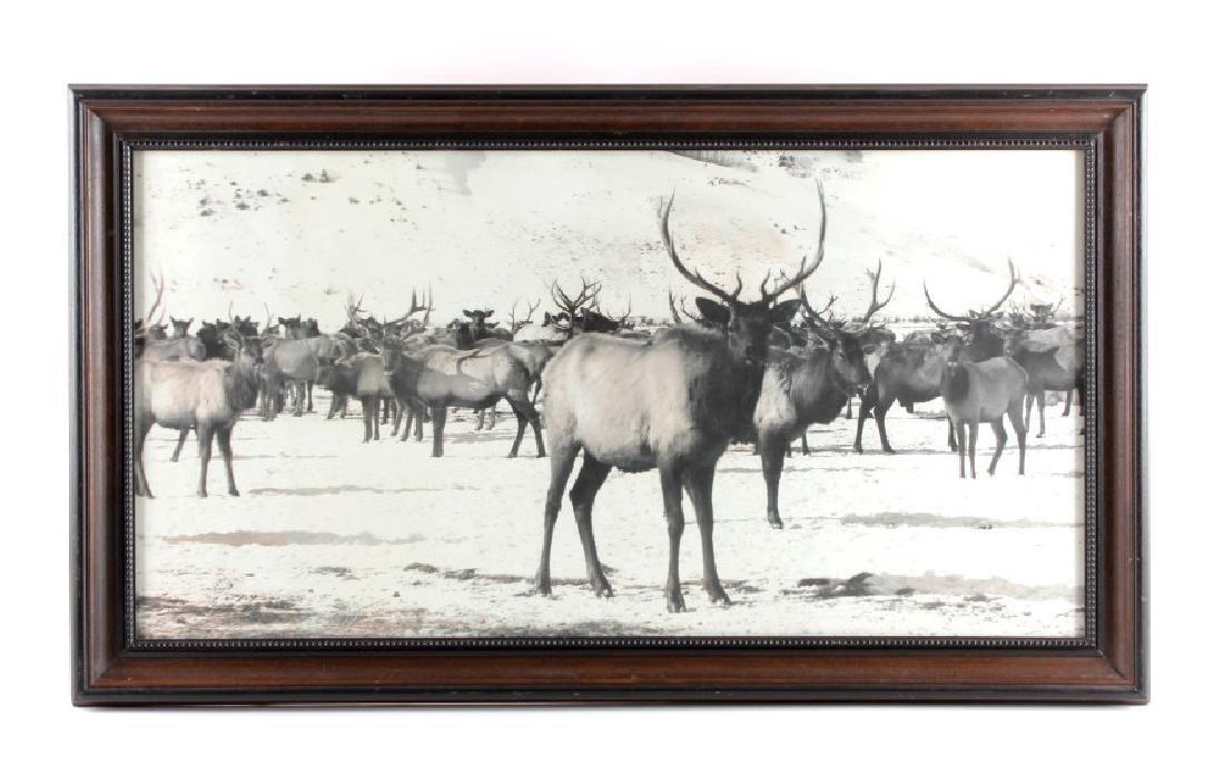 Original K.F. Roahen Yellowstone Elk Photograph