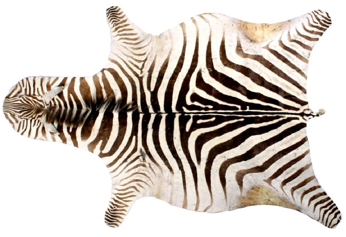 Trophy Zebra Taxidermy Hide Rug RARE