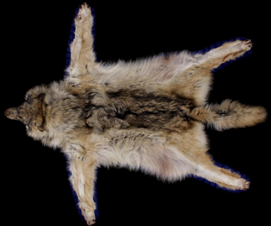 Montana Timber Wolf Taxidermy Double-Felted Rug