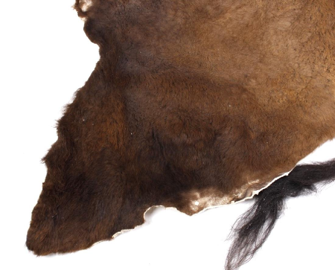 Wild Montana Trophy Buffalo Fur Hide Rug - 5