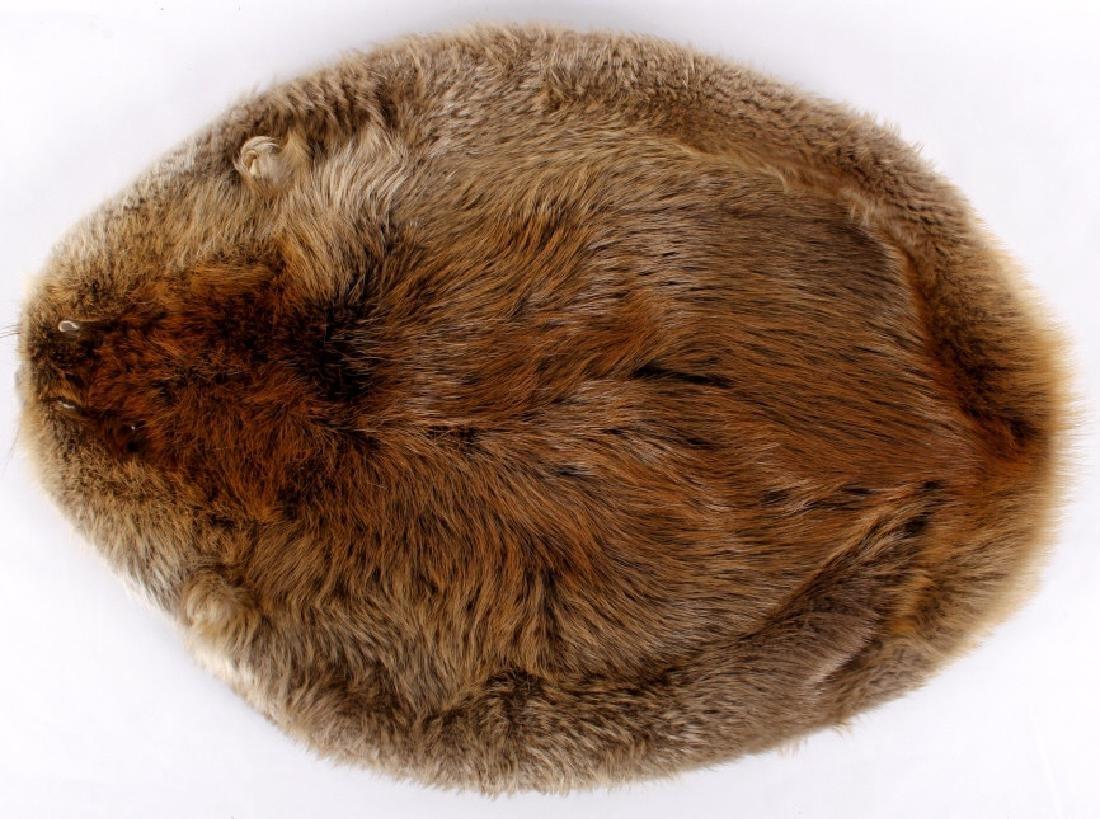 Tanned Montana Beaver Pelt Rug