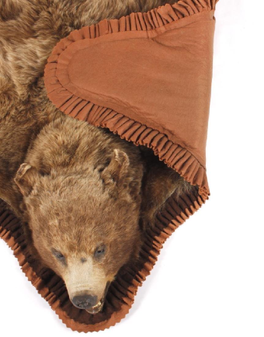 Montana Cinnamon Black Bear Taxidermy Trophy Rug - 8