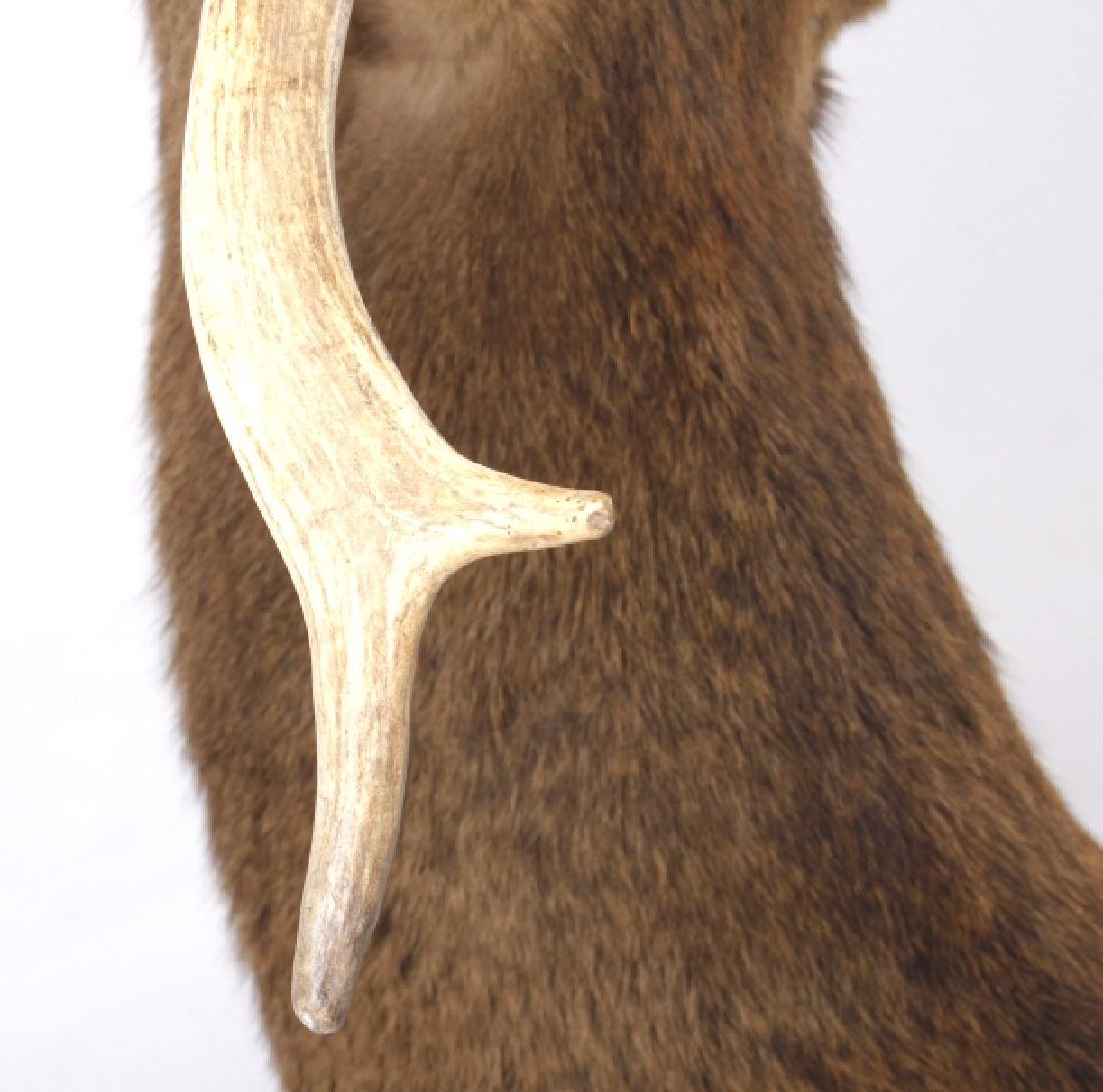 Montana Rocky Mountain Trophy Elk Shoulder Mount - 10