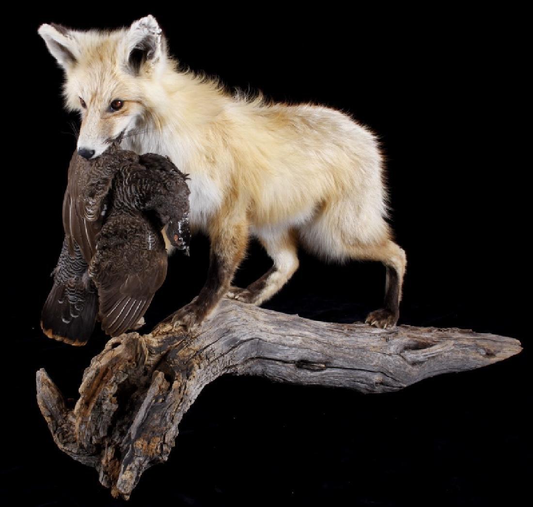 Montana Grey Fox And Pheasant Mount