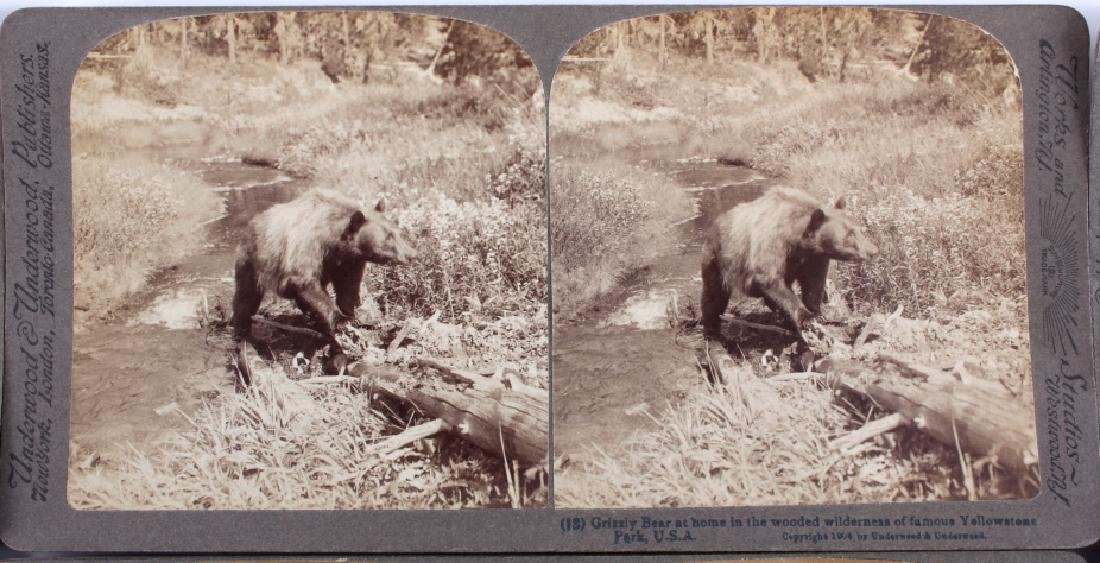 Yellowstone National Park Stereoview Set c.1904 - 8