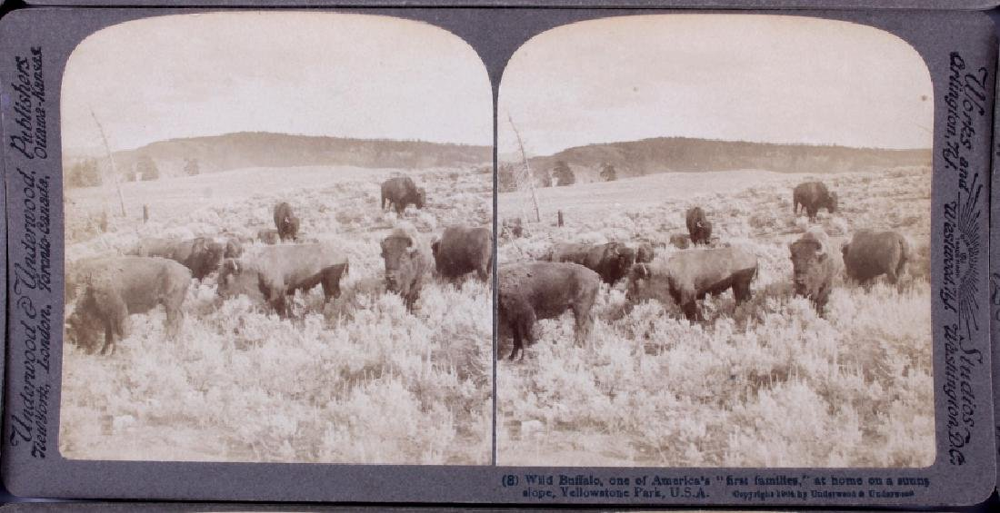Yellowstone National Park Stereoview Set c.1904 - 9