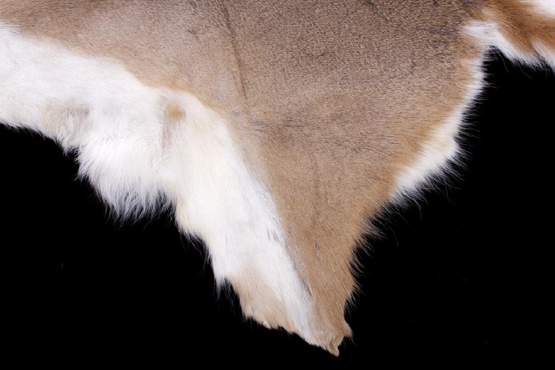 Montana Whitetail Deer Tanned Hide - 2