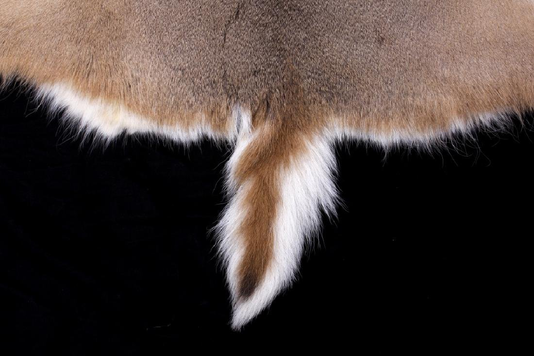 Montana Whitetail Deer Tanned Hide - 3