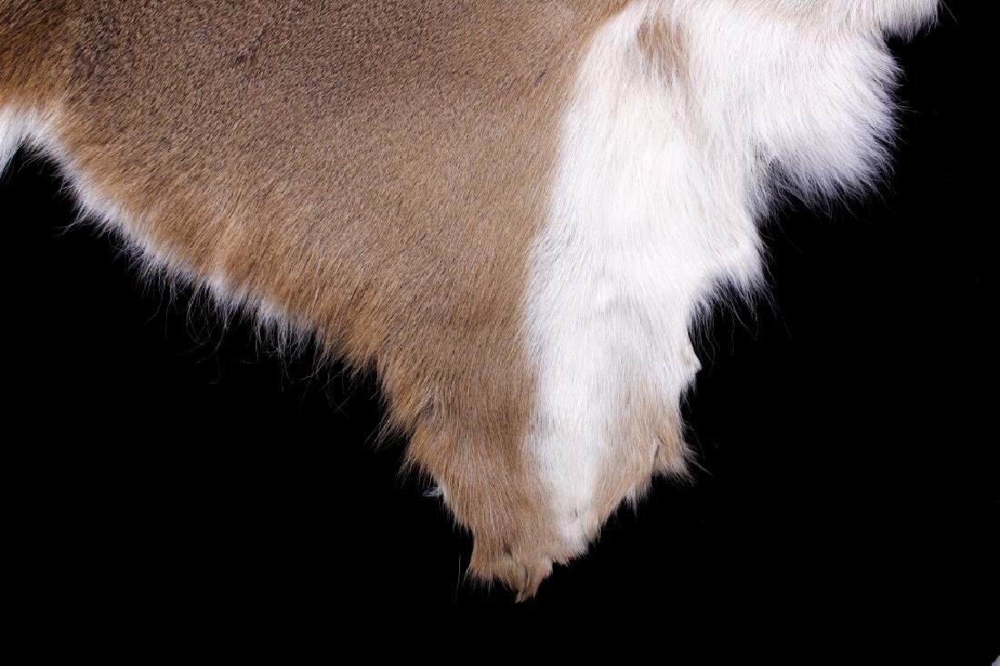 Montana Whitetail Deer Tanned Hide - 4