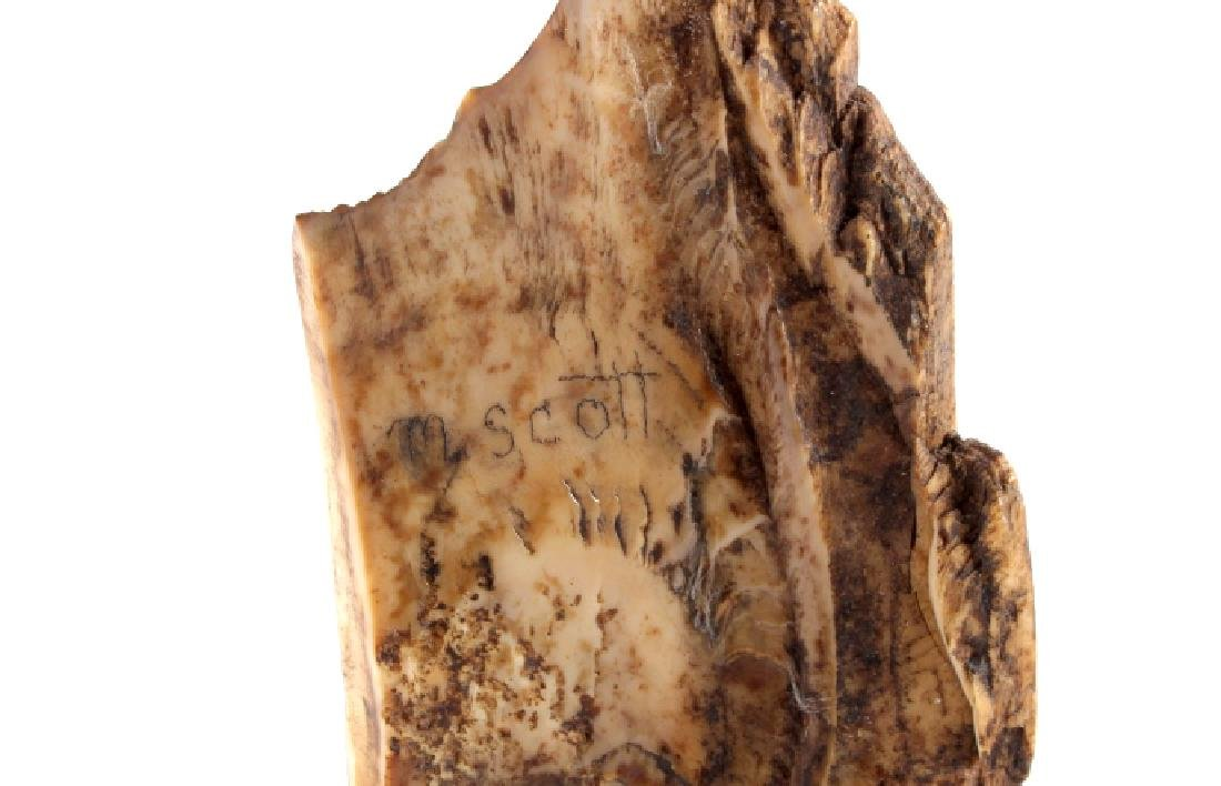 Ancient Wooly Mammoth Scrimshaw Tusk Alaska - 6