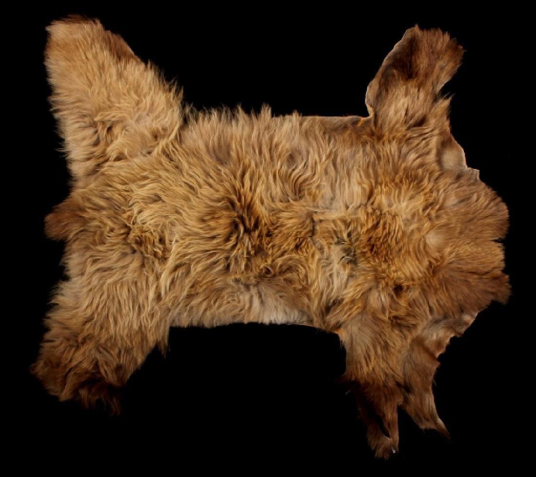 Idaho Cinnamon Black Bear Hide