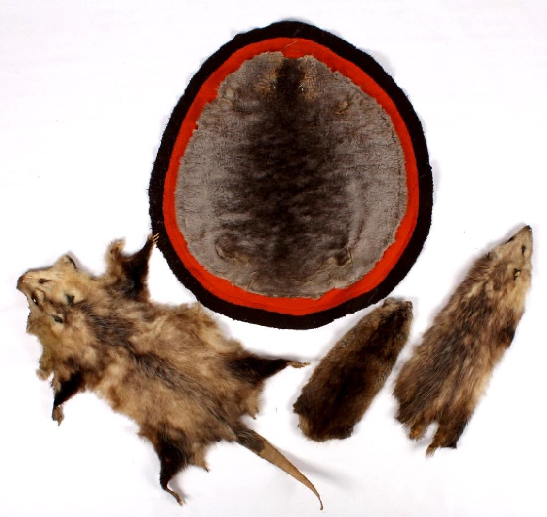Beaver Rug And Possum/ Muskrat Hide Collection
