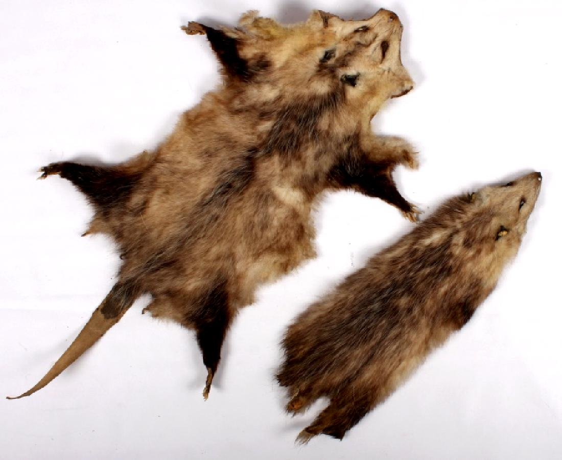 Beaver Rug And Possum/ Muskrat Hide Collection - 8