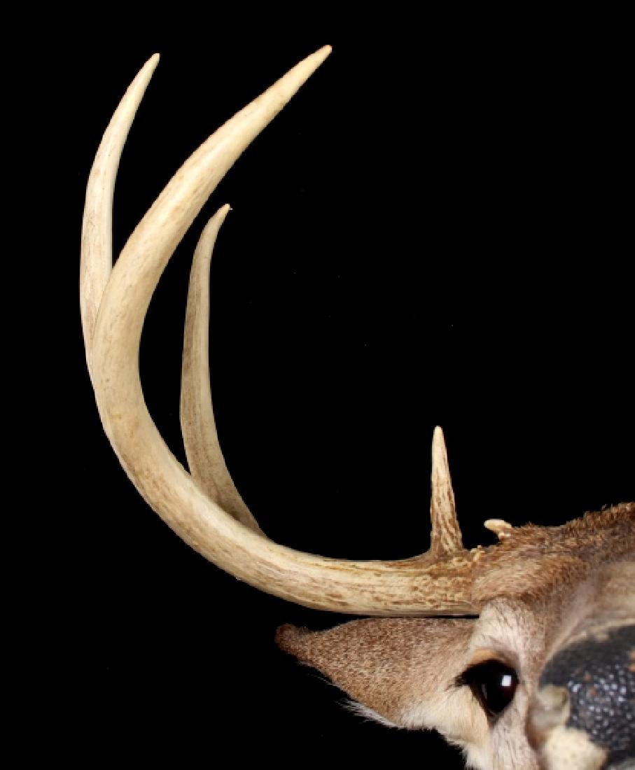 Montana Whitetail Deer Shoulder Trophy Mount - 4