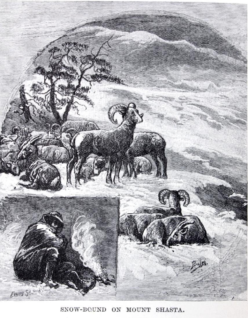The Mountains of California by John Muir 1898 - 10