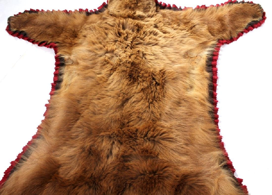 Montana Cinnamon Black Bear Taxidermy Trophy Rug - 7